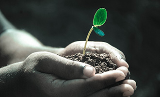 A close-up of two hands holding soil with a plant sprouting out of it